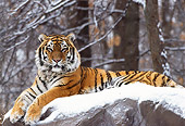 TGR 02 TL0019 01