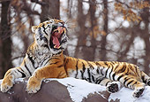 TGR 02 TL0020 01