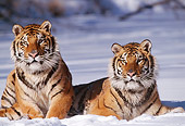 TGR 02 TL0022 01