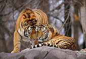 TGR 02 TL0023 01