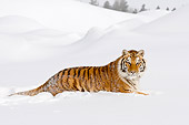 TGR 02 TL0028 01