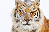 TGR 02 TL0029 01