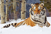TGR 02 TL0031 01