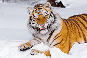 TGR 02 TL0033 01