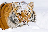 TGR 02 TL0034 01