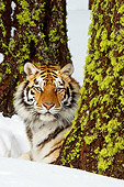 TGR 02 TL0035 01