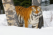 TGR 02 TL0043 01
