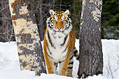 TGR 02 TL0044 01