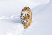TGR 02 TL0045 01
