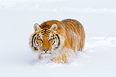 TGR 02 TL0046 01