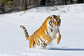 TGR 02 TL0047 01
