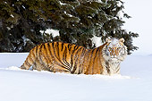 TGR 02 TL0050 01