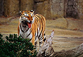TGR 03 RK0001 07