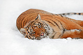 TGR 04 AC0006 01
