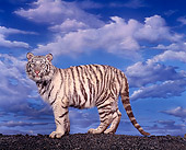 TGR 09 RK0011 02