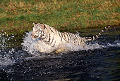TGR 09 RK0083 25
