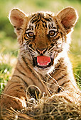 TGR 10 MH0003 01