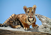 TGR 10 RK0105 01