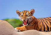 TGR 10 RK0115 16