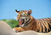 TGR 10 RK0115 18