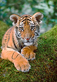 TGR 10 RK0168 47