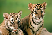 TGR 10 RC0004 01