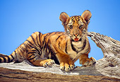 TGR 10 RK0105 14