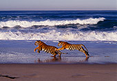 TGR 10 RK0129 20
