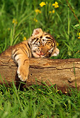 TGR 10 RW0001 01