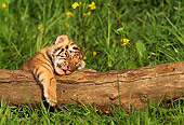 TGR 10 RW0002 01