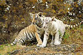 TGR 10 RW0006 01