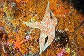 UWC 01 JM0030 01