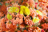 UWC 01 JM0036 01