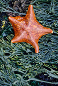 UWC 01 MC0001 01