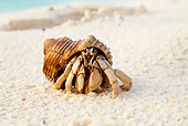 UWC 01 MH0005 01