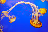 UWC 01 TL0004 01
