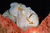 UWC 01 WF0014 01
