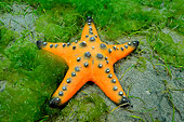 UWC 01 WF0019 01