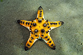UWC 01 WF0020 01