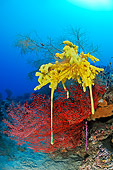 UWC 01 WF0022 01