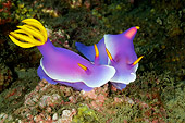 UWC 01 WF0026 01