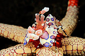 UWC 01 WF0033 01