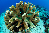 UWC 01 WF0036 01