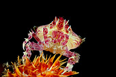 UWC 01 WF0039 01