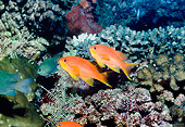 UWC 01 HB0034 01