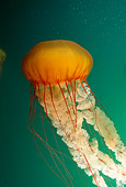 UWC 01 JM0008 01