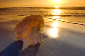 UWC 01 NE0003 01