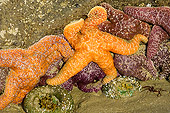 UWC 01 TL0001 01