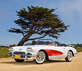 VET 02 RK0374 01