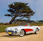 VET 02 RK0375 01
